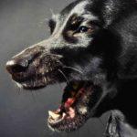 Dog Sneezing & Reverse Sneezing