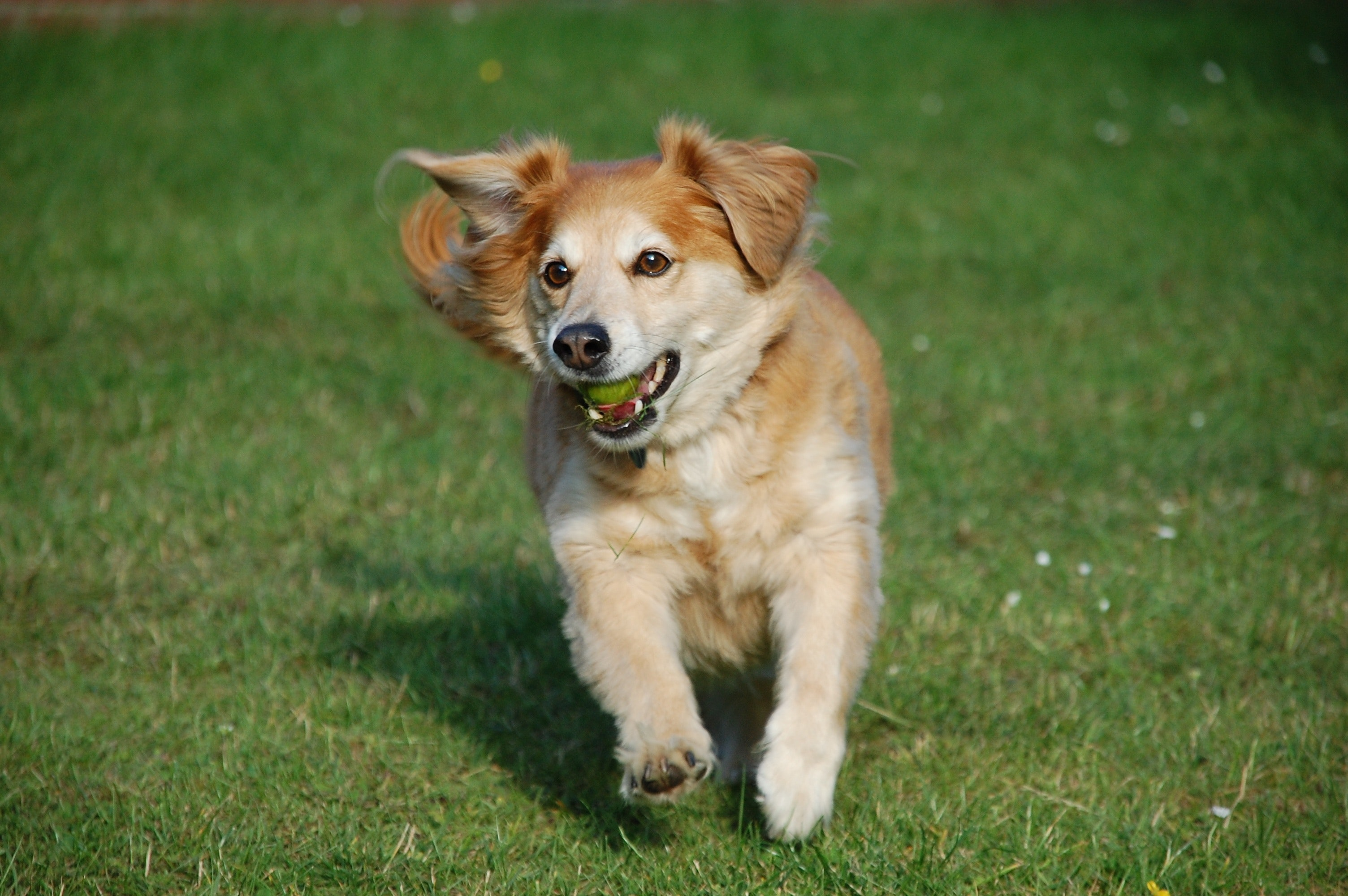 small dog running