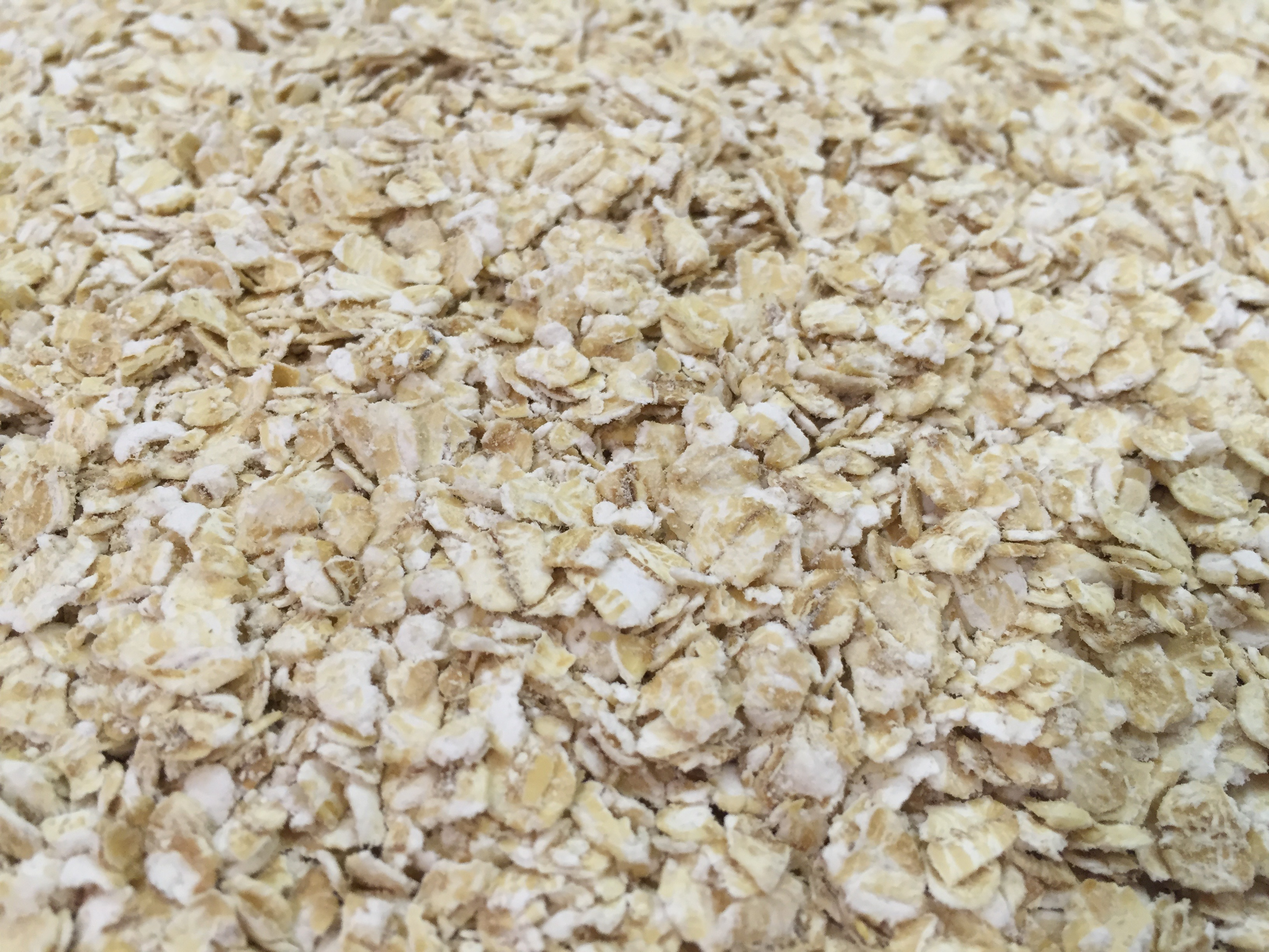 Can Dogs Eat Oatmeal? Is Oatmeal Good For Dogs?