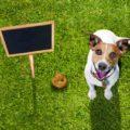 coprophagia dog eating poop
