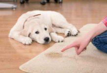 housetraining puppy dog