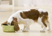 Acana Dog Food Reviews & Recalls