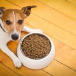 Best High Fiber Dog Food Brands