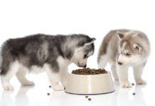 Blue Buffalo Dog Food Reviews & Recalls