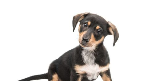 Fromm Dog Food Reviews & Recalls