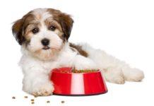 Merrick Dog Food Reviews & Recalls