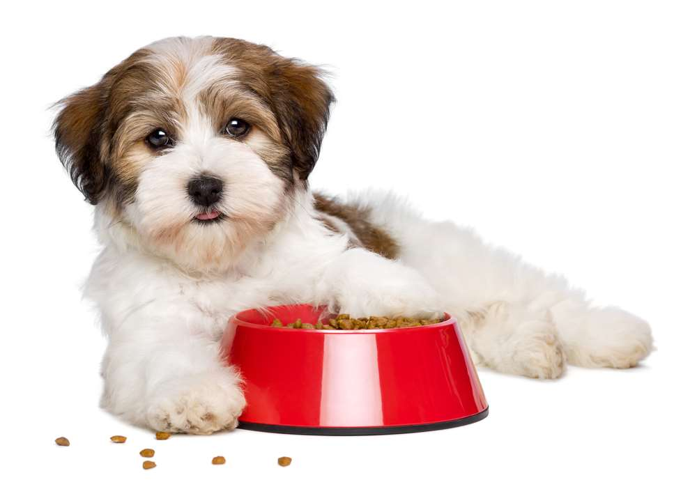 Merrick Dog Food Reviews & Recalls