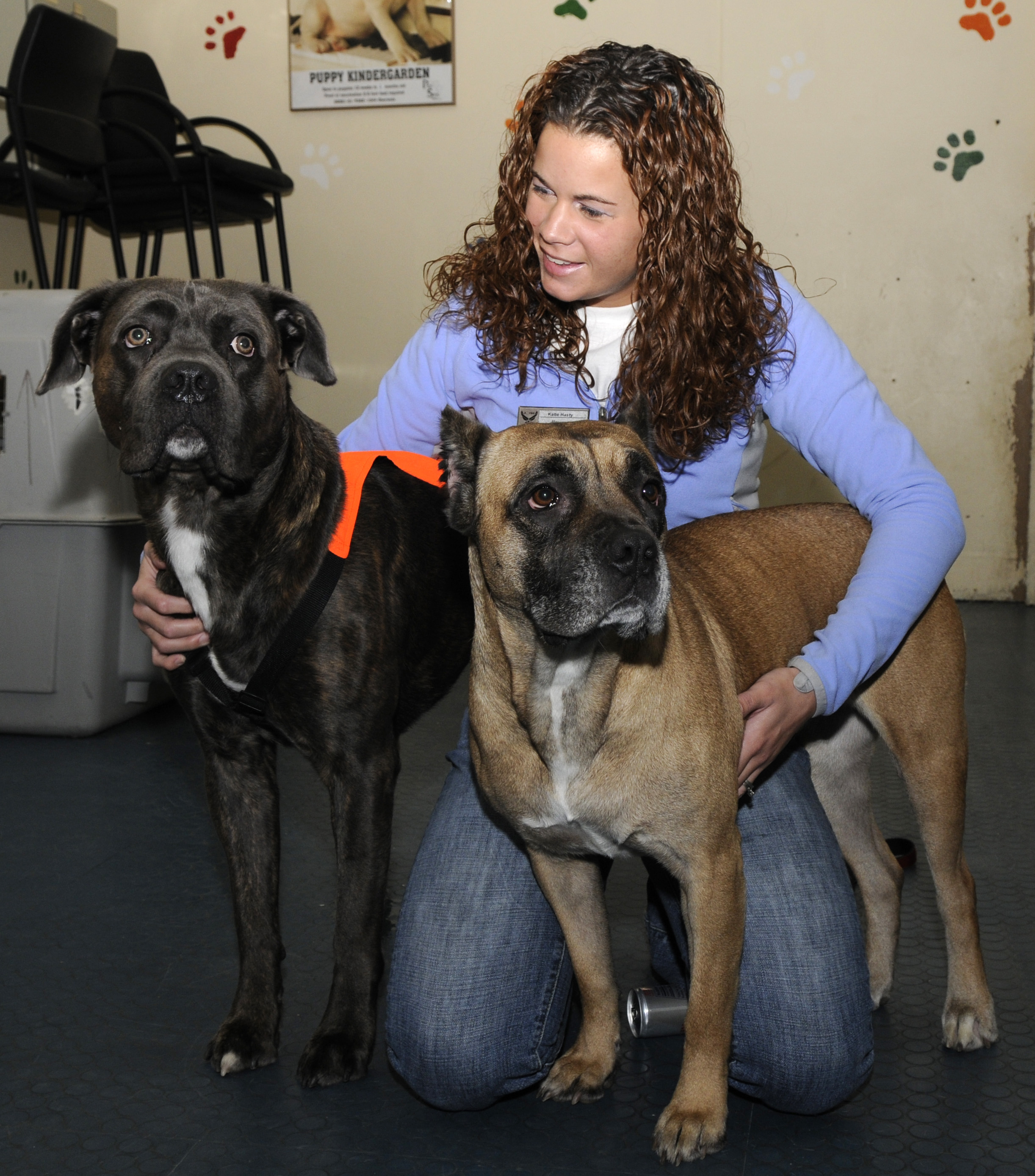 large dogs with lady