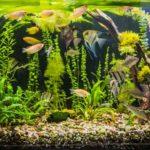 Aquarium Gravel Cleaners