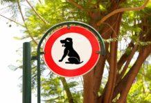 Best Dog Poop Scoopers