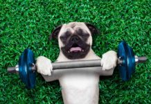 Glucosamine & Joint Supplements For Dogs