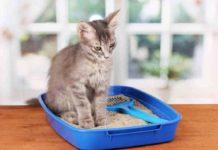 Best Cat Litter Mat Reviews