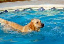 Best Dog Pool Reviews