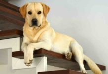Dog Stairs, Dog Steps & Dog Ramps