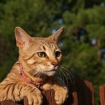Shock Collars For Cats