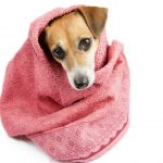 Best Dog Towels for Drying