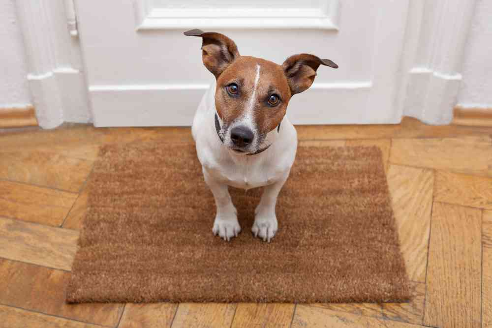 Best Doormats For Dogs