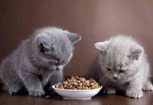 Best Kitten Food Brands