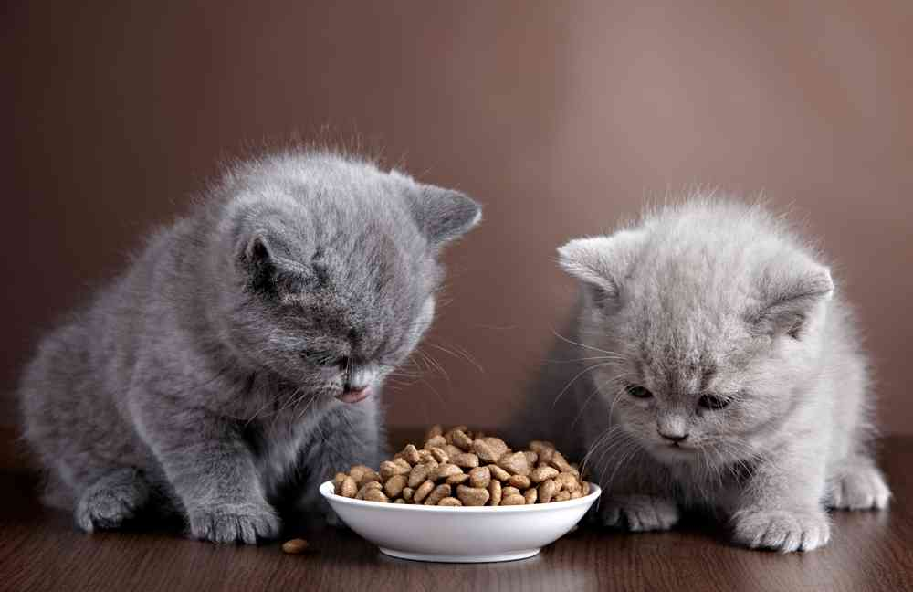 Best Kitten Food Brands