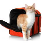 Best Soft Sided Cat Carriers