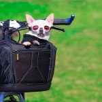 Best Dog Bike Baskets For 15 lbs, 20 lbs & 25 lbs