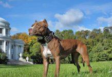 Best Dog Crates For Pitbulls