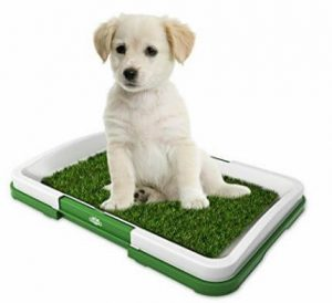 Find The Perfect Indoor Dog Potty For Your Pooch 5