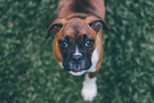 Best Dog Food For Boxers (2019's Top 5 Picks) 9