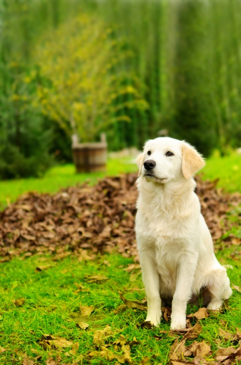 Gardening Tips to Help Keep Your Dog Safe in the Backyard 1