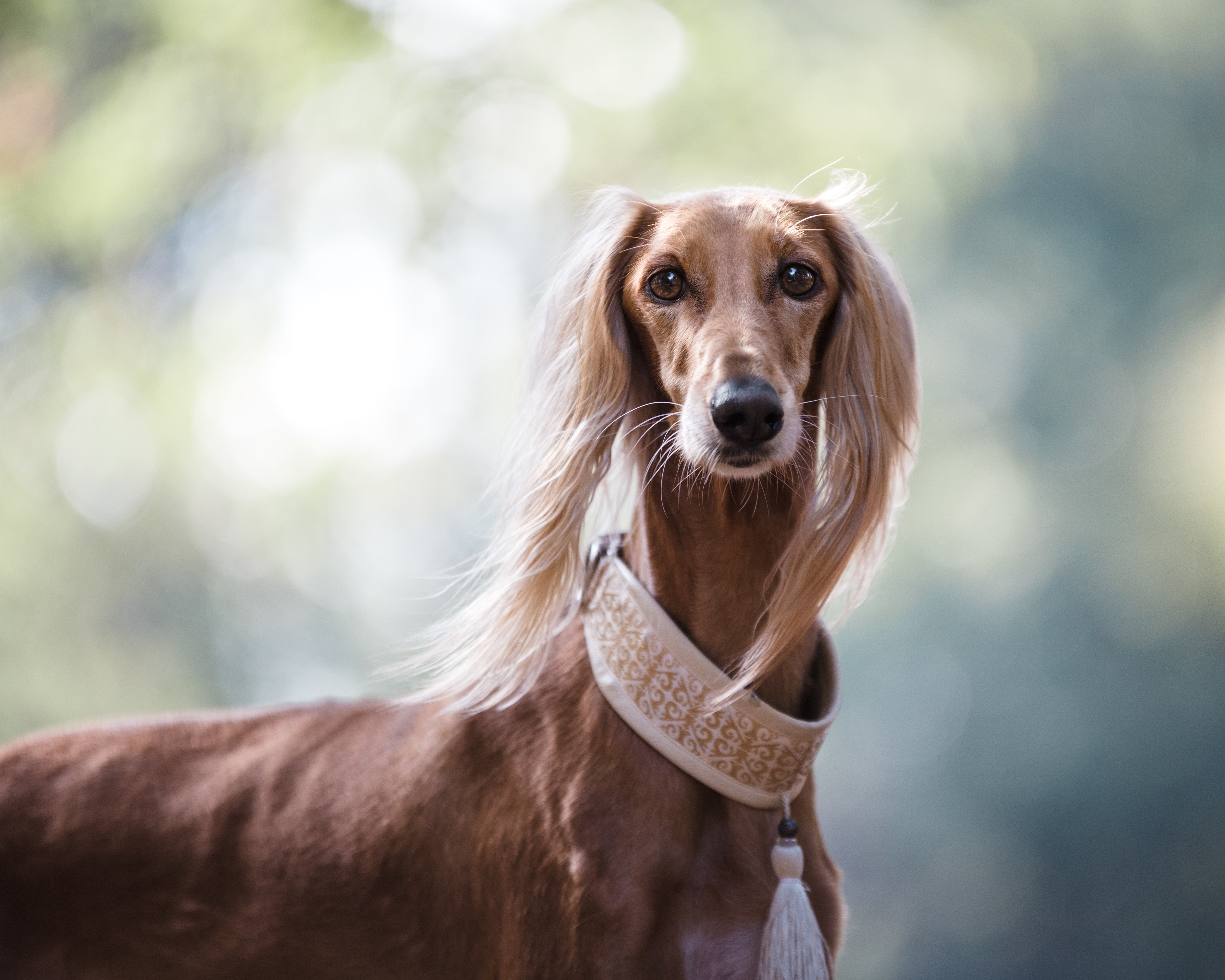 Best Dog Food For Sensitive Stomachs 2018s Top 5 Picks Ultimate