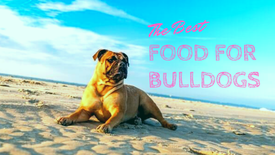 Best Food for Bulldogs