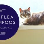 Cat Flea Shampoo