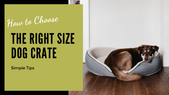 Dog Crate Size Tips