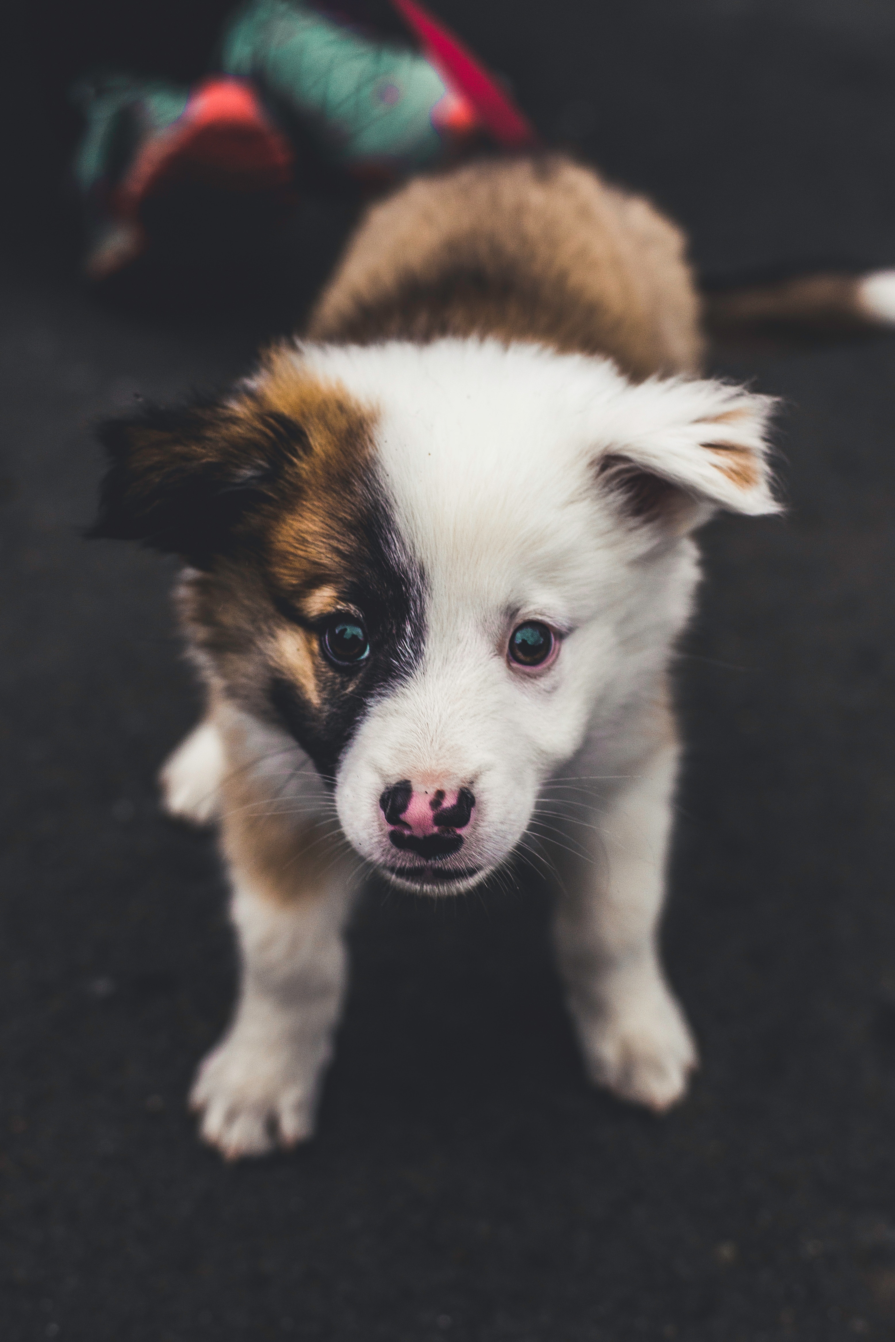 Puppy Begging