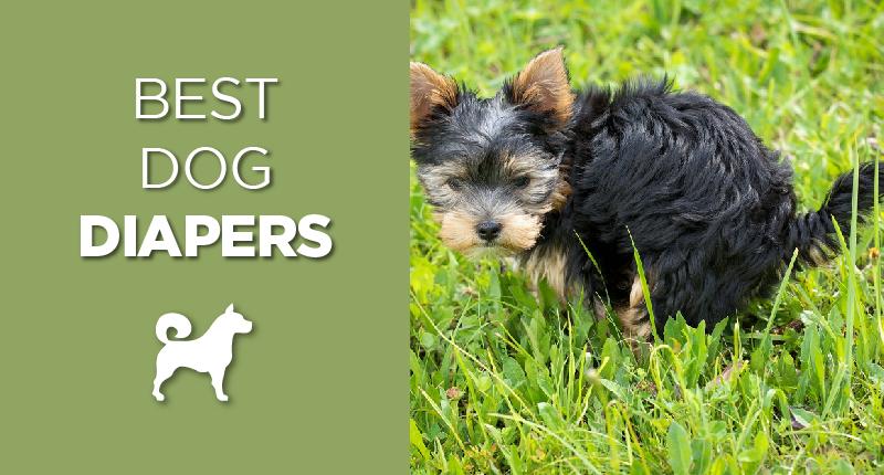 Best Dog Diaper Reviews 2018s Top 4 Picks Ultimate Home Life