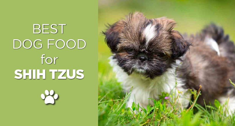 Best Dog Food For Shih Tzus 2019s Top 5 Picks Ultimate Home Life