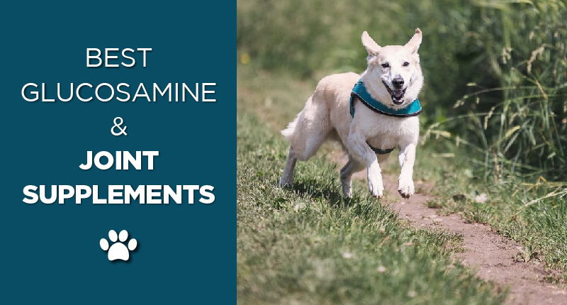Best Glucosamine & Joint Supplements For Dogs In 2019 1