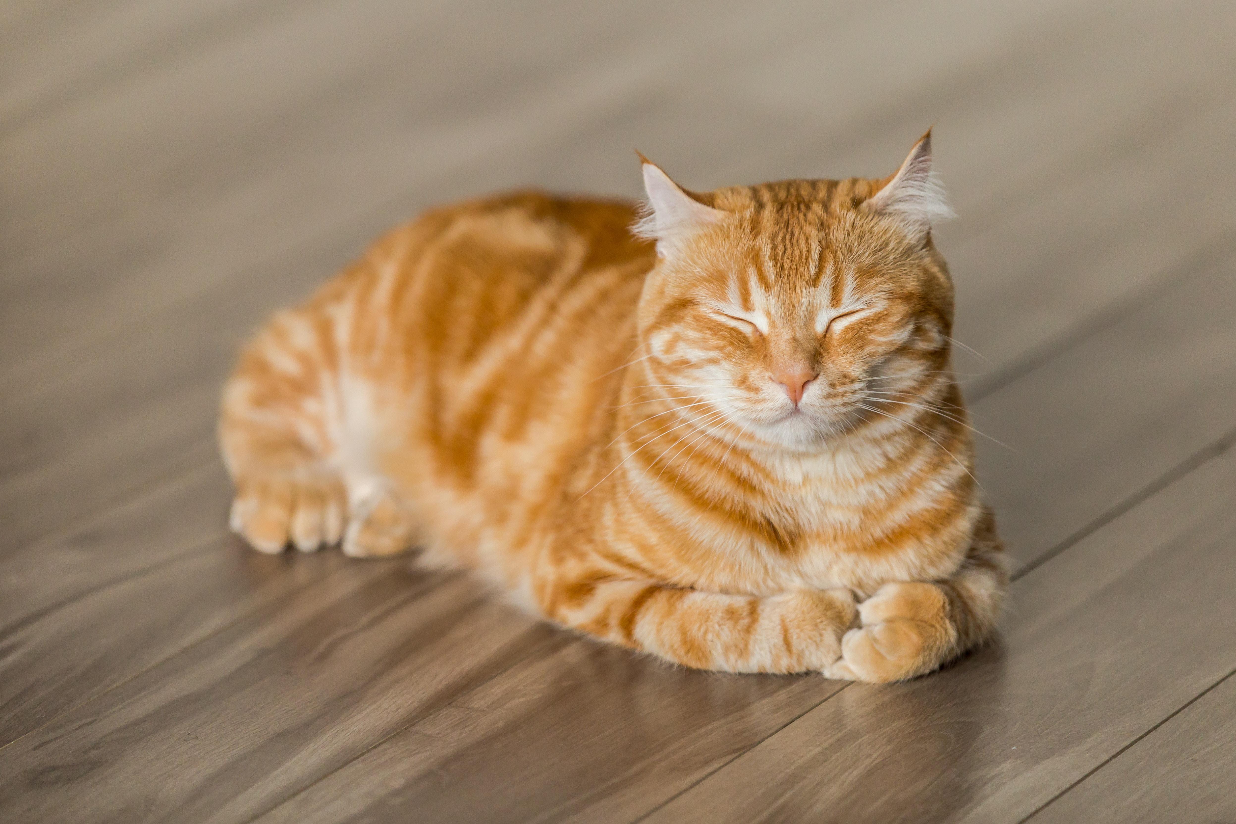 Garfield Cat Food