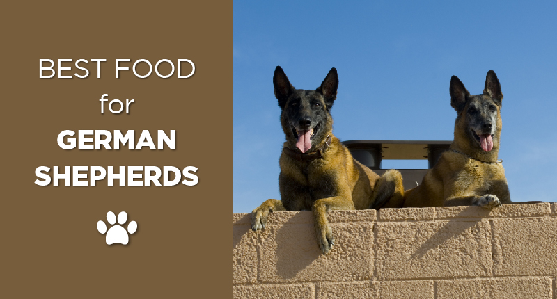 Your Guide To Finding The Best German Shepherd Food 1
