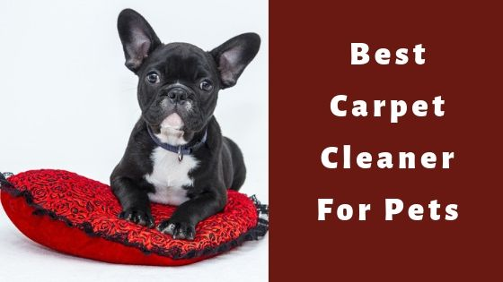 best carpet cleaner for pet